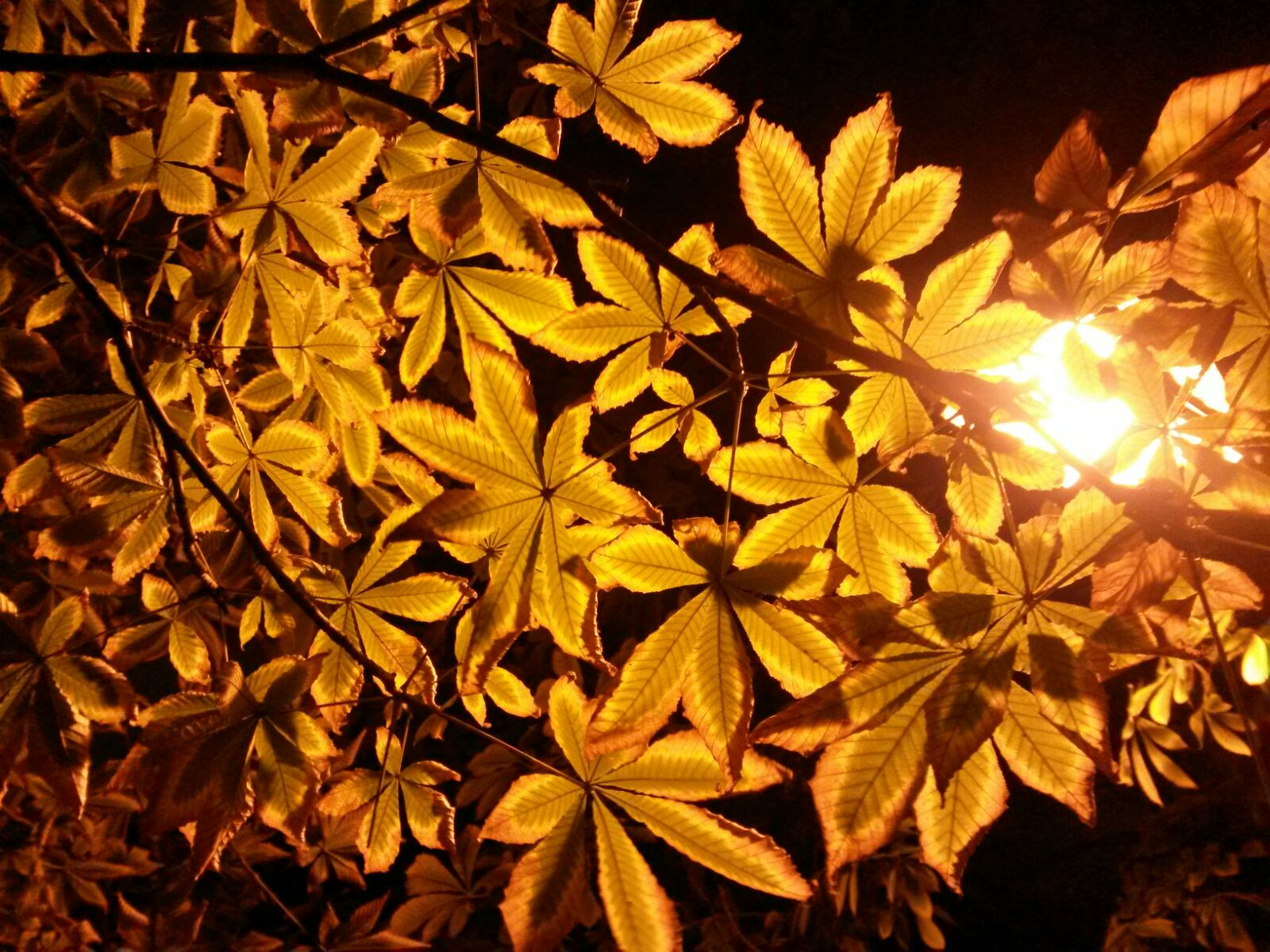 hojas otoño noche aventuracosmetica